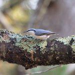演習林の野鳥たち